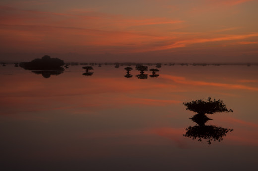 The sun lights up the clouds over a lagoon with Red Mangrove islands at Merritt Island National Wildlife Refuge before dawn.