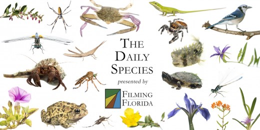 Montage of Daily Species.