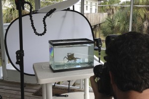 Behind the Scenes shooting for Meet Your Neighbours aquarium setup.